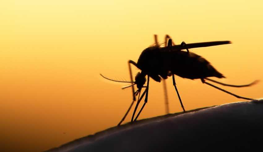 CRISPR-Cas9 Gene in Mosquitoes