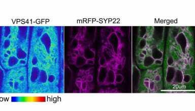 نقش پروتئینهای گیاهی HOPS در باز و بسته شدن روزنهها