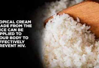 سویه ای از برنج تراریخته میتواند ویروس HIV را خنثی کند.