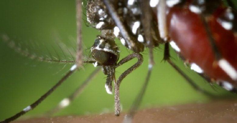 با توجه به خطر انتقال برخی بیماریهای خطرناک توسط پشهها، امروزه محققین به کمک تکنیکهای نوین سعی دارند تا با اصلاح نژاد پشهها به مقابله با این گونه بیماریها بپردازند.