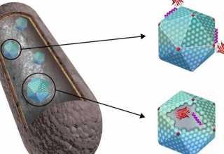 ساختارهای سلولی باکتریایی