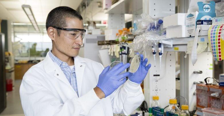 محققان دانشگاه Wisconsin-Madison با استفاده از ابزار ویرایش ژن CRISPR و تغییرات نوکلئوتیدی در سویه مخمر حساس به مایعات یونی و پیش تیمار تولید سوخت زیستی، موفق به تولید مخمری شدند که میتواند در کنار مایعات یونی که به طور معمول سمی هستند، زنده مانده و عمل تخمیر را انجام دهد.