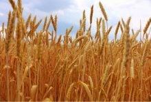 تبدیل پسماند کشاورزی به محصولات با ارزش