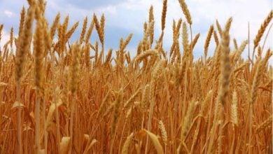 Photo of تبدیل پسماندهای کشاورزی به محصولات جدید