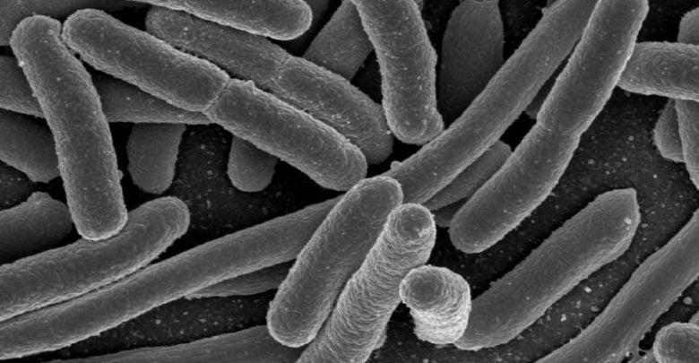 مقاوم به آنتیبیوتیک