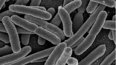 Photo of فواید باکتری E.coli برای تقویت جذب آهن