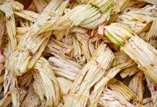 بهبود تولید اتانول و بیوگاز از باگاس نیشکر