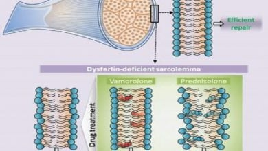 Photo of کارکرد داروهای استروئیدی در اختلالات عضلانی