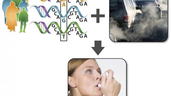 ژنتیک و آلودگی، عامل تشدید علائم آسم