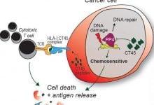 Photo of کشف بیوماکر CT45 در بیماران مبتلا به سرطان تخمدان