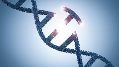 Photo of Improved Genome Editing Treads Lightly on DNA