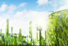 Photo of رشد اقتصاد زیستی در جنگل های ایرلند