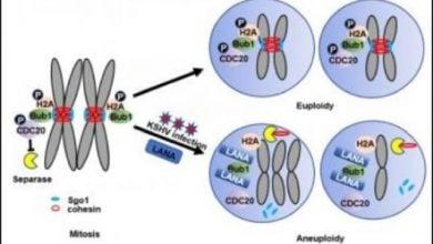 KSHV و بیثباتی ژنوم
