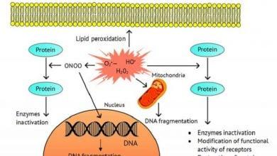 Photo of تأثیر ROS بر مقاومت سیس پلاتین در سلولهای سرطانی تخمدان