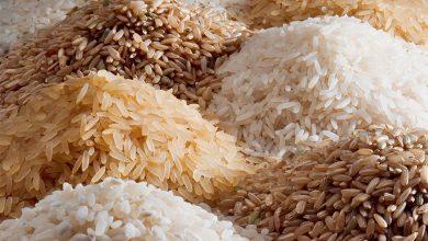 Photo of کشف ژن C3'H در برنج