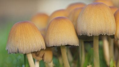 Photo of Fungus-based Pesticides Might Be the Green Solution of the Future
