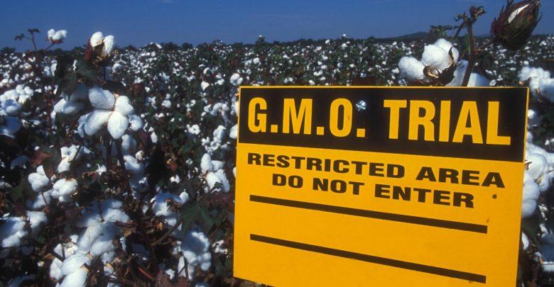 GMO cotton - اخبار زیست فن