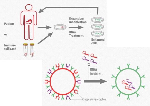 استفاده از RNA مداخلهگر در ایمنیدرمانی سرطان