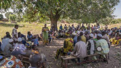 Photo of رهاسازی پشههای تراریخته برای اولین بار در آفریقا