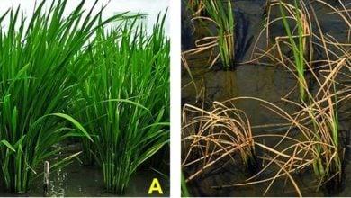 Plant growth-promoting bacteria - اخبار زیست فن