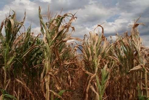 Reaction of plants to drought - اخبار زیست فن
