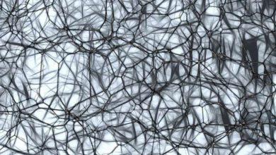 درک جدیدی از آلزایمر به کمک مدلسازی بیان ژن