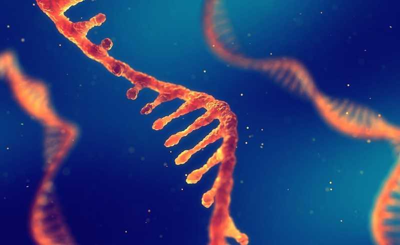 RNA drug
