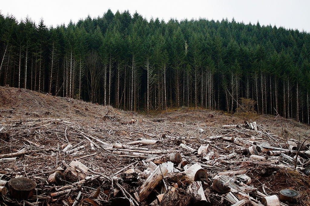 biomass environment impact