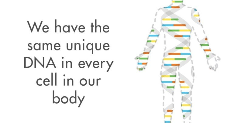 DNA یکسان سلول های بدن