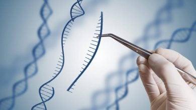 ارتباط بین گونههای باکتری به کمک مهندسی ژنتیک