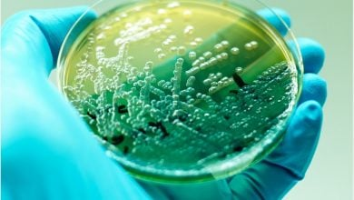 Photo of مبارزه با باکتریهای مقاوم به دارو به کمک ابزار جدید
