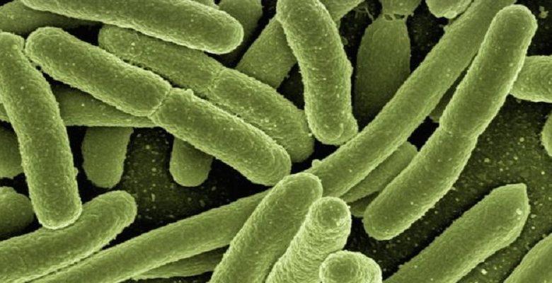 پروبیوتیکهای مصنوعی راهی برای درمان بیماریهای ژنتیکی