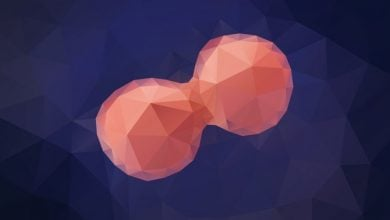 اولین مدل تعاملی از تقسیم سلولی در انسان