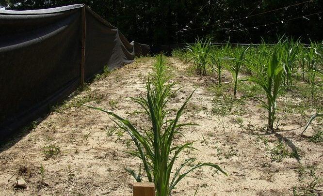 تولید سوخت زیستی از جلبک ها