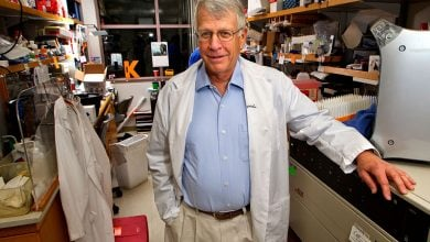 Photo of Stanford scientists engineer way to prevent immune response to gene therapy in mice