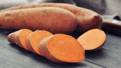 انشمندان چینی ژن IbSnRK1 را مورد بررسی قرار دادند و ثابت کردند این ژن نقش کلیدی در بهبود کیفیت و محتوای نشاسته در سیب زمینی شیرین دارد.