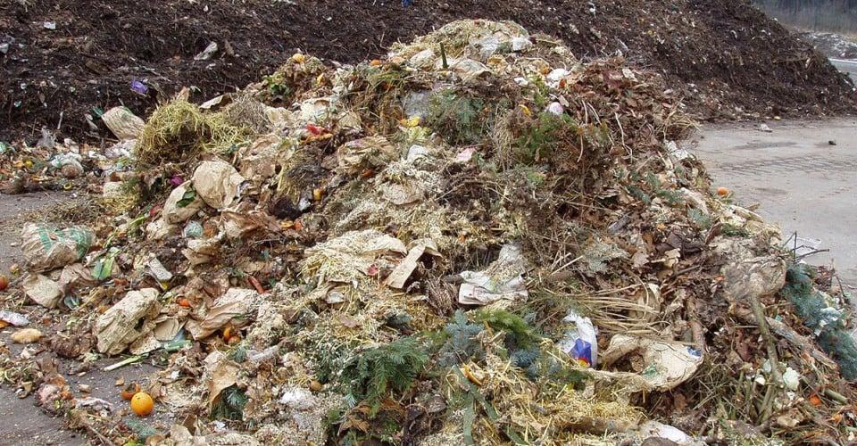 waste biomass