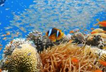 زیست فناوری دریایی