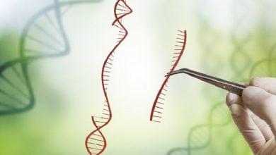 Photo of شناسایی ژن مسئول در بیوسنتز هورمون استریگولاکتون