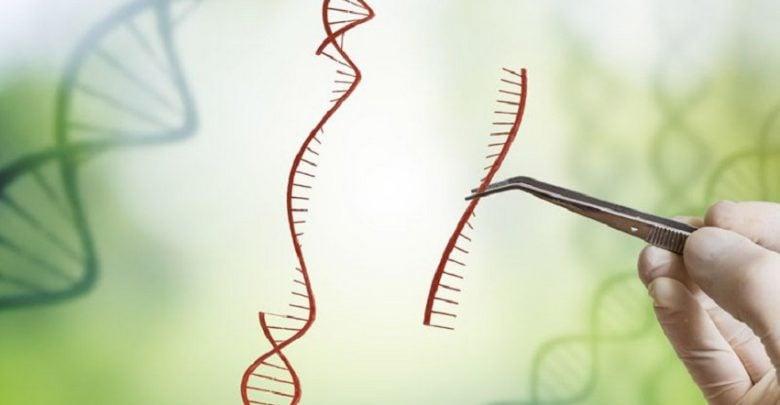 در بسیاری از گیاهان مانند برنج، هورمون استریگولاکتون تأثیر به سزایی در بروز ویژگی ظاهری و مقاومت به انواع تنشها دارد.