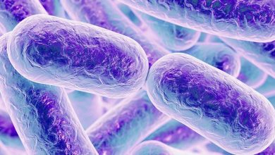Photo of Bacterial protein mimics DNA to sabotage cells' defenses
