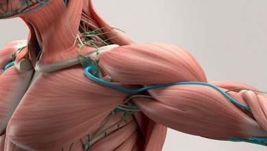 Photo of نقش ماکروفاژهای سیستم ایمنی در التیام عضلات