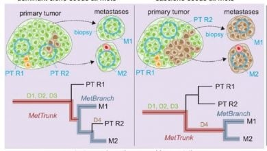 Photo of Identical driver gene mutations found in metastatic cancers