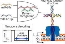 microRNA patterns of lung cancer