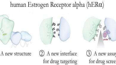Photo of توسعه داروهای سرطان پستان با گیرندههای استروژن
