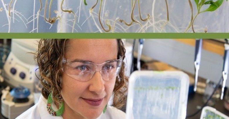 نقش شبکهای از ژنها در بهکارگیری نیتروژن توسط ریشه گیاه