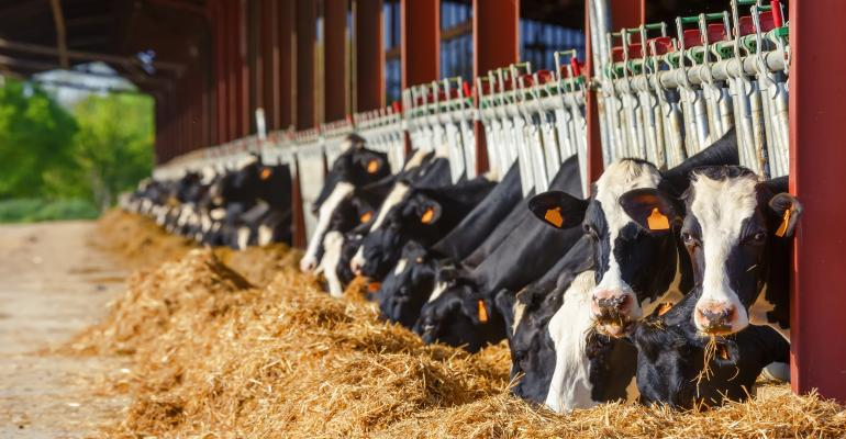 Clay supplements in dairy cows - اخبار زیست فن