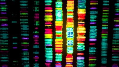 Photo of DNA sequencing and patient data used to halt infection outbreak
