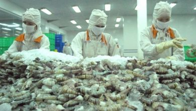 Photo of Intensive processing helps Vietnamese shrimp gain competitive edge