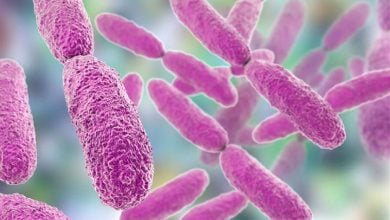 Photo of Scientists engineer a powerful new weapon against antibiotic-resistant bacteria